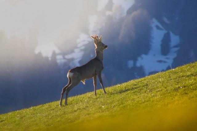 Fauna dei boschi