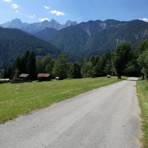 Strada bosco